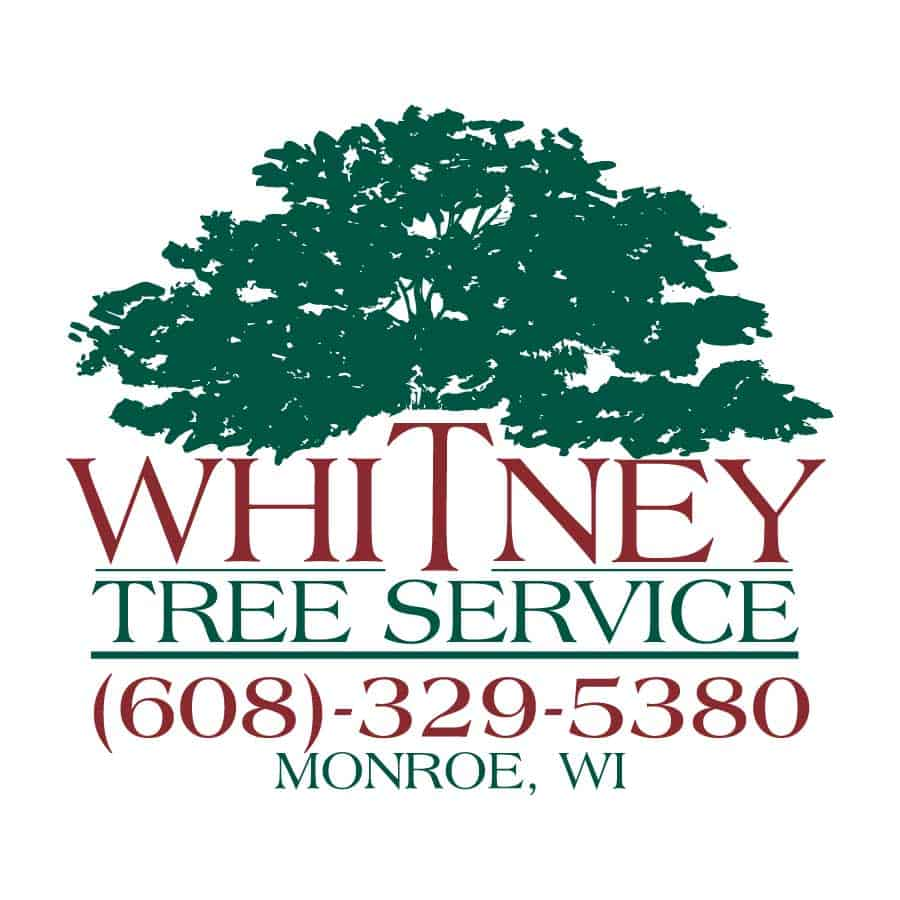 Logo_Design_Whitney_Tree_Service